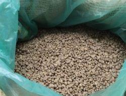 Buy Green (unroasted) Haitian Coffee