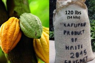 Raw Haitian Cacao (chocolate) Beans