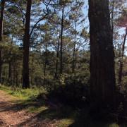 Haiti's Pine Forest Coffee