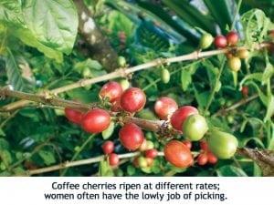 Help Haiti, Drink Coffee