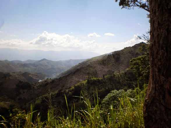 Reforesting Haitian Mountains w/ Coffee, Singing Rooster