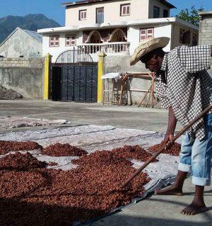 raw cacao, haiti