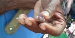 haitian cacao criollo
