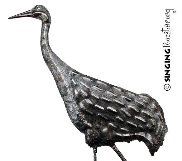 sandhill crane closeup