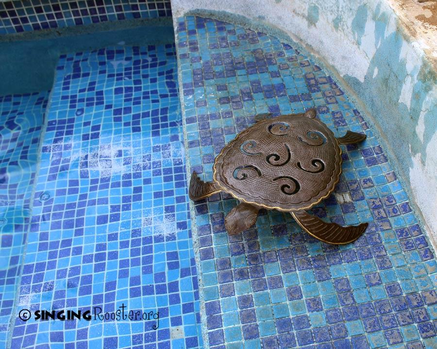 save turtle art
