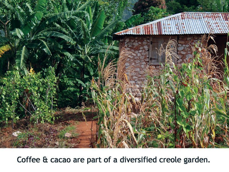 creole gardents, Haiti