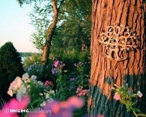 tree life outdoor